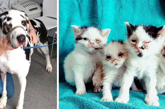 死が間近に迫っていた子猫たち。犬の献血のおかげで、見違えるほど美しい姿を取り戻す。