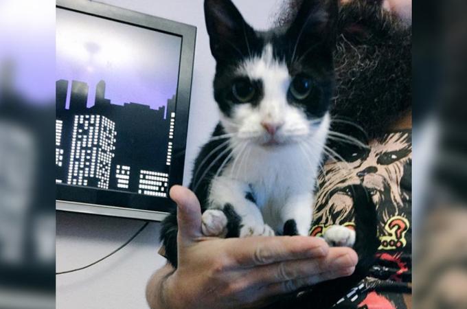 体の小さい13歳の猫。安楽死の危機から救われ、新しい家族に甘えながら幸せな毎日を送る。