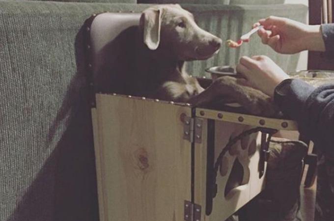 毎回、ベビーチェアでご飯を食べる犬。そうしなければいけない、切ない理由とは。