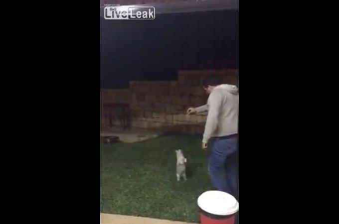 エサで猫をおびき寄せ、思い切り蹴飛ばした男。映像がネットで拡散され大炎上。