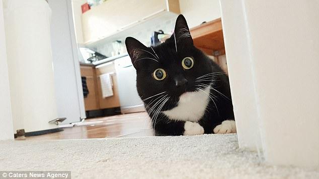 「私のビックリ顔にビックリしないで」そのフレーズで猫を家族へと迎え入れ、今では話題の中心はいつも愛猫!