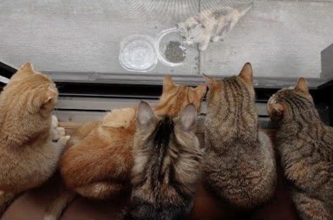 ひとり寂しく暮らしていた野良の子猫。10匹の猫を飼う家へと招き入れられ大家族となる。