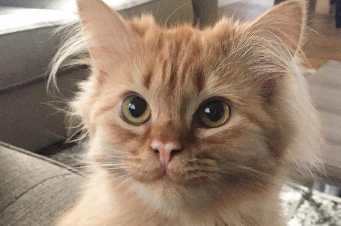 保護施設で新しい飼い主さんに猛アピールして家を手に入れた子猫。その後、素敵な笑顔を見せ続ける。