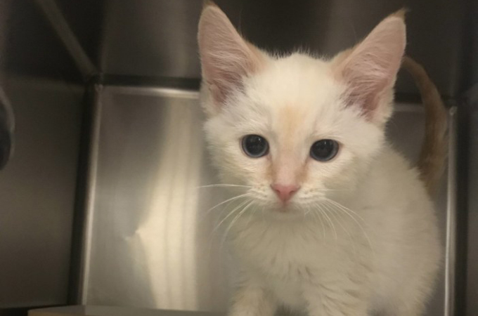 保護施設に1匹だけ取り残されていた子猫。その魅力的な瞳に一目惚れした女性の家族となり、幸せを手に入れる。