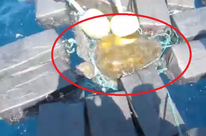 ウミガメが800キロものコカインに絡まっているところを発見され、沿岸警備隊に救助される。