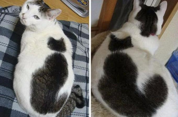 一度見たら忘れられない!特別な毛並みを持った猫たちの画像25枚