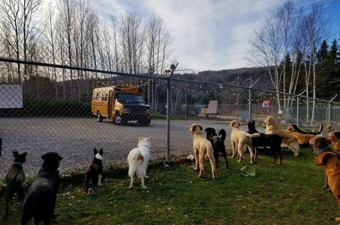 大切な家族である犬たちの「孤独」を感じさせない!黄色いバスが連れていく犬たちの喜ぶ素敵な場所とは。
