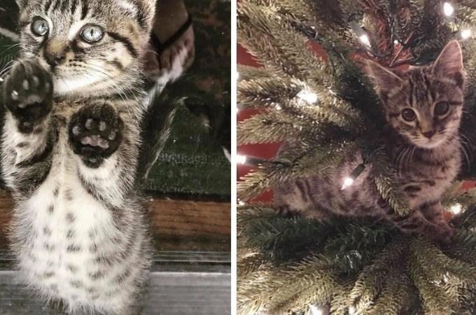 ゴミ箱の中にいるところを救出された子猫。素敵なクリスマスを満喫し幸せを手に入れる。