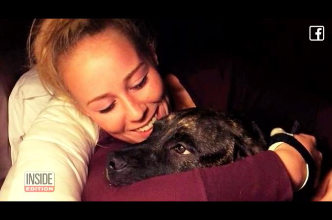 ピットブルが散歩中に22歳の飼い主に襲いかかり喰い殺す事件が発生。