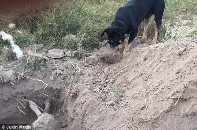 友の死を受け止め、掘られた穴に砂をかぶせ埋葬する犬。その姿に目が熱くなる。