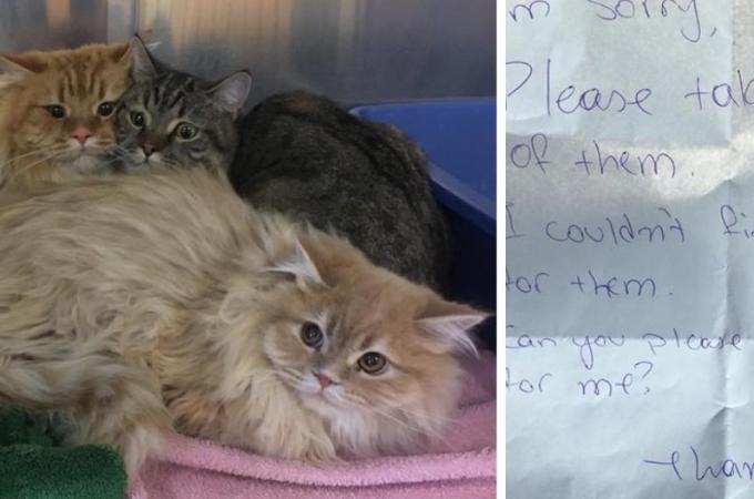 メモと一緒にペット洋品店に捨てられた3匹の猫。そして、メモに書かれていた内容とは。