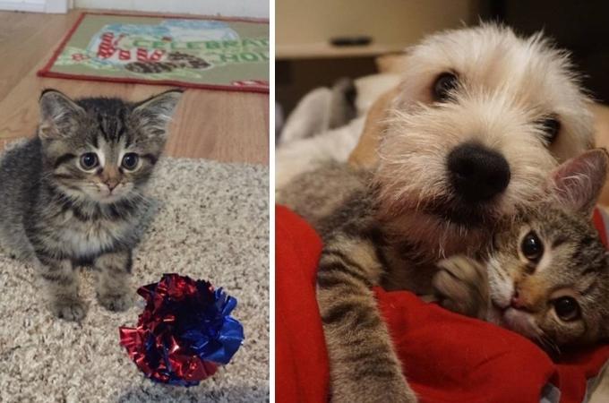 生まれつきハンディを抱えた子猫。新しい家族と親友との出会いによって幸せを手にし成長する。