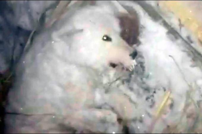 犬に水をかけ、-32度の屋外に放置した飼い主。その後、助けを求めながらも凍死した犬の飼い主に批難の声。