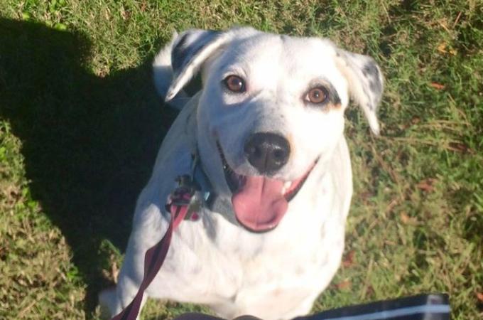 「飼い主のそばに居たがる」という理由で捨てられた犬。シェルタースタッフはその理由を理解し受け入れる。