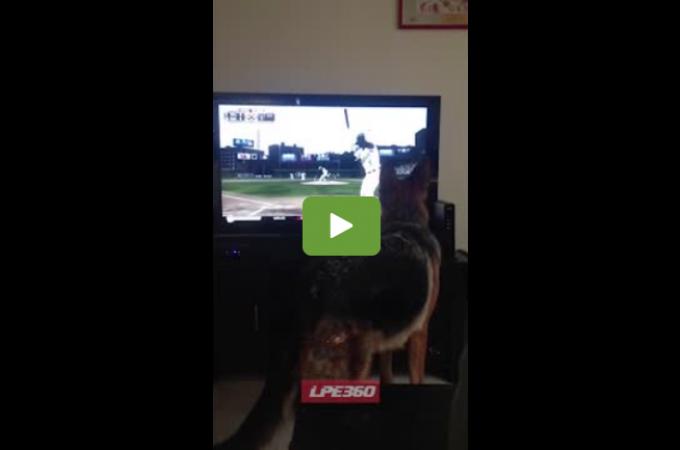 危機一髪!!野球中継を見ていた飼い主。愛犬が思いもよらぬ行動をとり、あわや大惨事!!