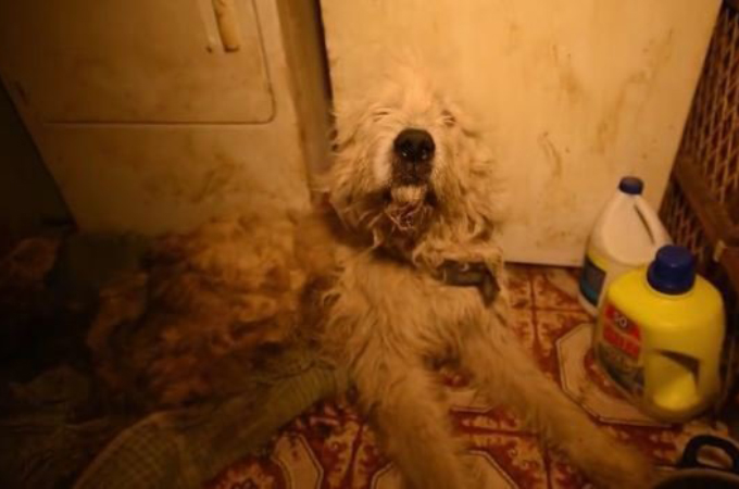 悲惨なパピーミル現場から救出された犬。そのあまりに酷い現場を見たスタッフも思わず言葉を詰まらせる。