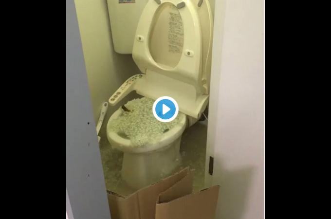「絶対に猫砂をトイレに流さないで!!」猫砂の間違った処理方法で大混乱になる様子がTwitterで話題に。