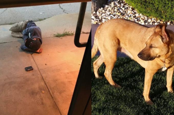 たったひとりの家族(愛犬)を探してホームレスの男性がなけなしのお金を使いシェルターを訪れる。