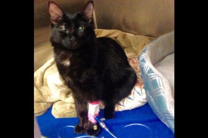 人間による虐待によって目を背けたくなるほどの傷を負った子猫。その動物虐待の裏にある悲しい連鎖とは。