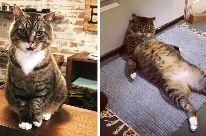 骨折をし傷だらけの状態だった野良猫を保護した女性。一緒に生活することとなり、猫が恩返しをし始める!