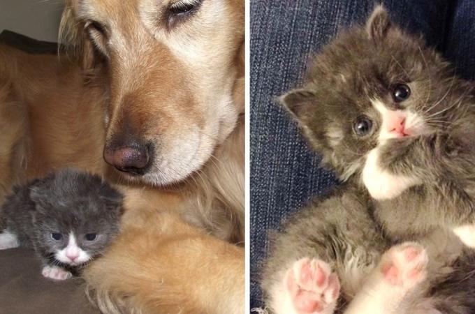 死の淵から生還した子猫。毎日を精一杯に生きる姿と、それを支える人たち。