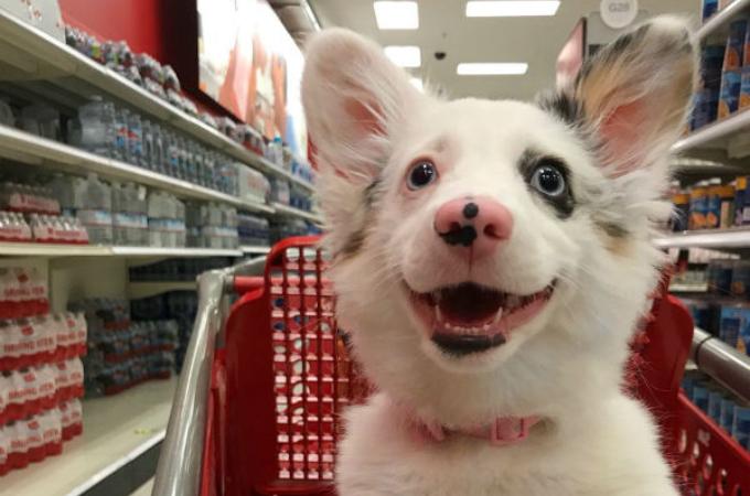 愛犬と買い物を楽しんでいる様子をSNSに投稿した飼い主。すると批判が相次ぎ謝罪することに。その内容とは。