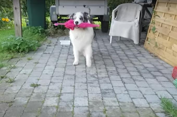 なにこれ!可愛すぎ!犬がスキップする様子に多くの人が笑顔になる!