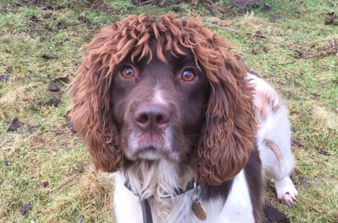 髪の毛がフサフサすぎる警察犬。目を疑うようなヘアースタイルに多くの人が反応!!