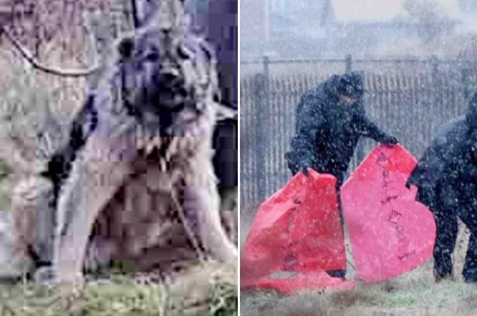 電柱にくくりつけられていた犬が発見され、警察が飼い主を探すも見つからず、犬を射殺し批難が殺到する。