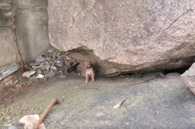岩の前におよそ10時間も立ち尽くしていた、1匹の子犬。その理由に胸が熱くなる。