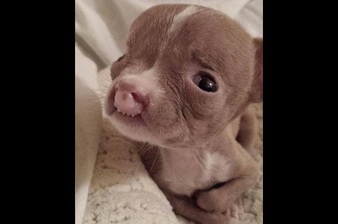 口が縦に裂けいくつもの障害を持って生まれた子犬。安楽死という選択を前に、獣医が引き取り懸命に命を繋ぐ。