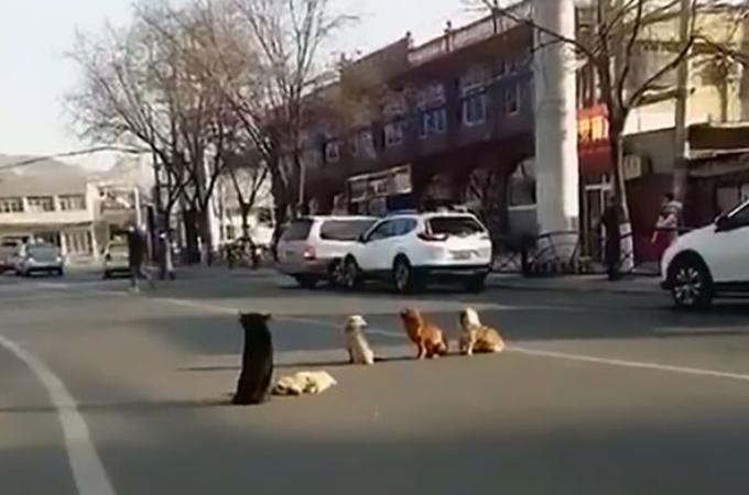 車に轢かれてしまった犬を守ろうと、路上で動こうとしない4匹の犬。その様子に胸を打たれる。