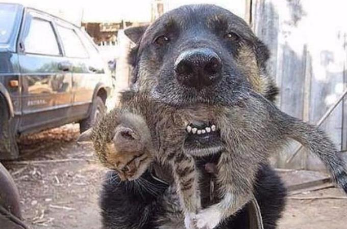 まさに英雄!!人間や他の動物たちの窮地を救ってきた犬たち10選。