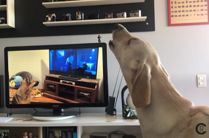 テレビに映る犬の遠吠え。その遠吠えに反応して連鎖している場面が撮影される。