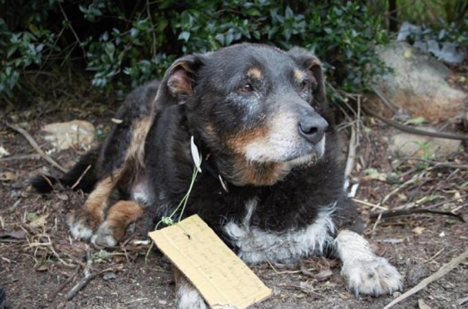 行方不明になった愛犬。帰ってきたと思ったら首元にメモが。そして、行方不明の間に何があったのか明らかに。