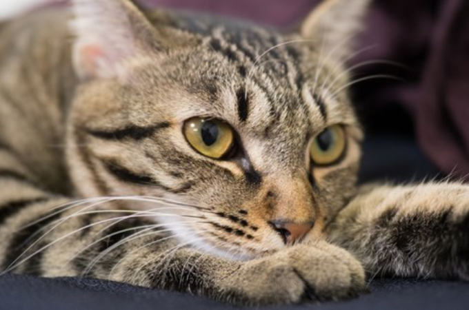 猫を飼って30年になる父が「猫アレルギー」疑惑。そして、医師と母のやりとりに看護婦が思わず吹き出す。
