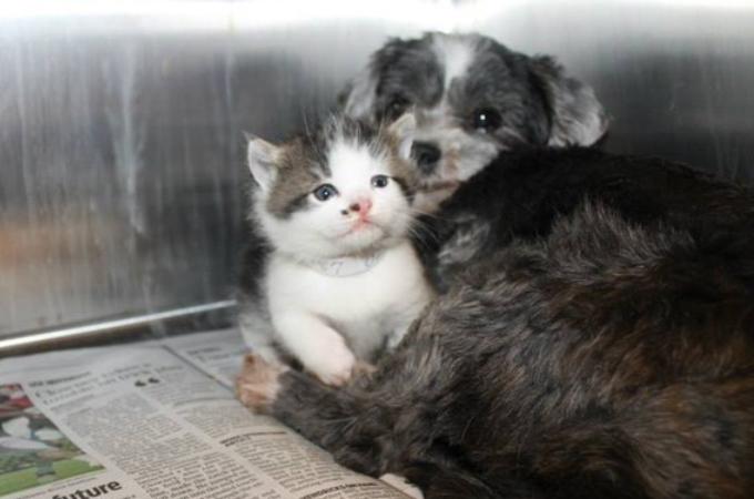崖の下で助けを求める1匹の犬。保護しに行くと、そこにいたのは子猫にミルクを与える犬の姿が。