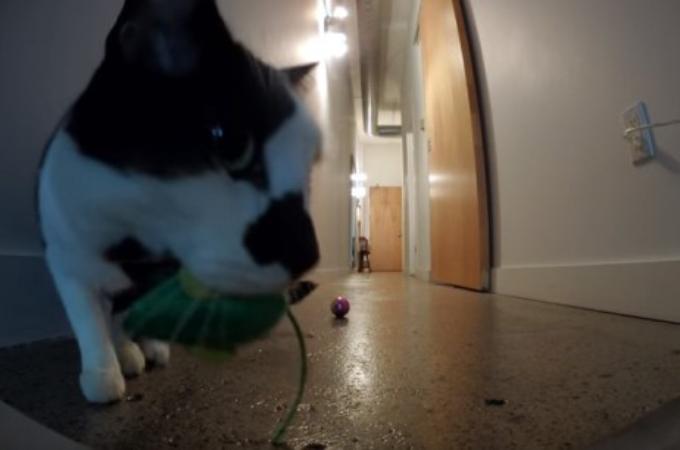 甘えん坊の愛猫が、飼い主が外出した直後どうしているかを撮影。そして、胸が苦しくなるその様子とは。