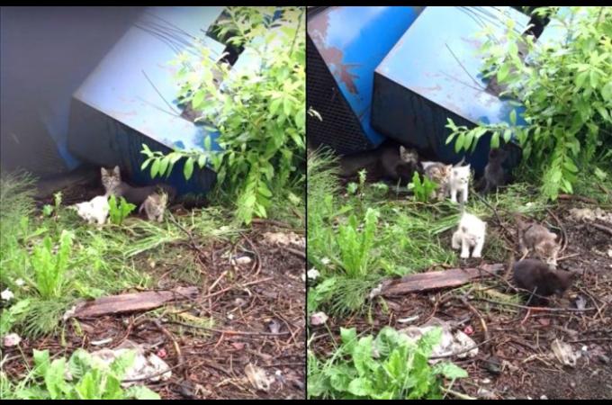 魚の加工工場の廃棄置き場で野良猫を見つけ、鳴き真似をして呼ぶと、20匹の子猫たちが現れる。