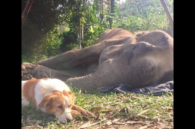 人間に酷使され、瀕死のゾウに寄り添い愛を届け続けたのは、同じ人間のために働き、使い物にならなくなって保護区にやってきた犬だった。