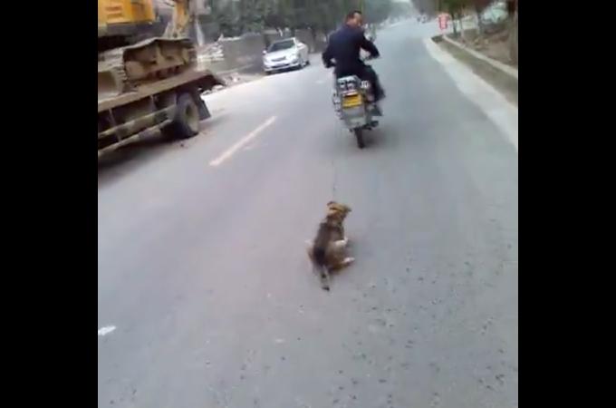 バイクで引きずられ死んでしまった犬。さらに同じ週に同じ事件が発生。その様子に憤りを覚える。