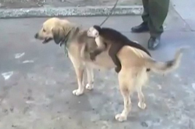 母親がいない子ザルが、子犬を亡くした母犬の背中にしがみつく様子に胸が締め付けられる。