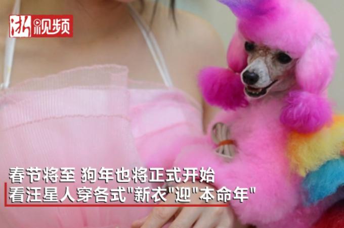 パンダやトラ、様々なカラーリングをされる中国の犬たち。その姿に胸が苦しくなる。