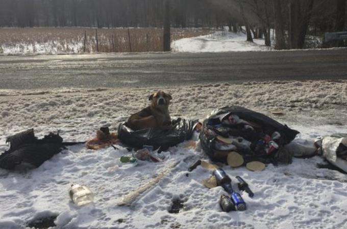 雪の中、ゴミと一緒に捨てられた犬。優しい夫婦に保護され、無事に里親の元で幸せに暮らす。