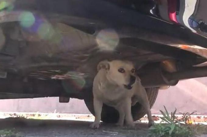 人を寄せつけず、警戒していた野良犬。過去に何かあったのではないかと思うその様子から、保護されるまで。