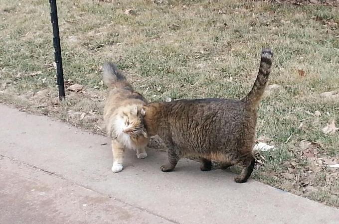 職員や学生にお世話されながら大学の構内で幸せに暮らす70匹の野良猫。人間との接し方になれ巣立っていく猫も。