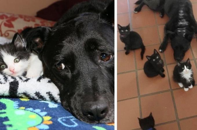 大切な存在だった猫の死に悲しんでいた1匹の犬。その後、100匹を超える猫たちのお世話をすることに。