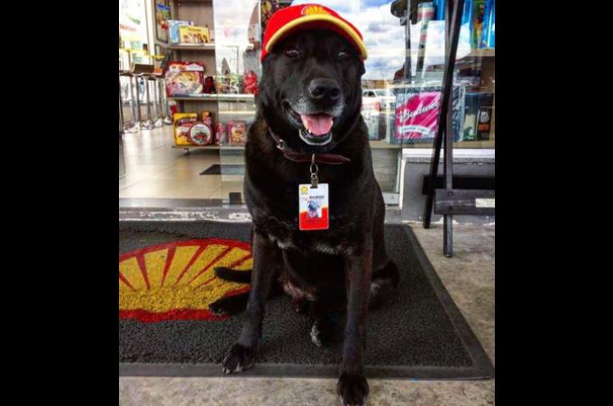捨て犬だった犬が、ガソリンスタンドの店員として笑顔で接客。その笑顔に癒されるお客さんも。
