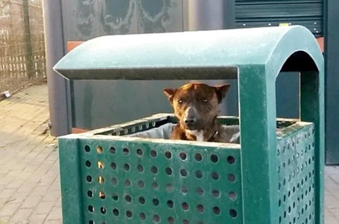 寒い公園でゴミ箱の中で震えていたところを発見された犬。その後、保護され元気を取り戻す。
