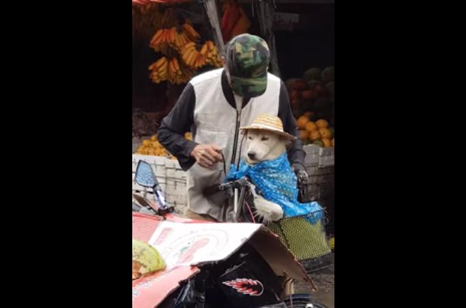 犬が雨に濡れないように帽子をかぶせる優しいおじいさん。その姿に癒される人が続出!!